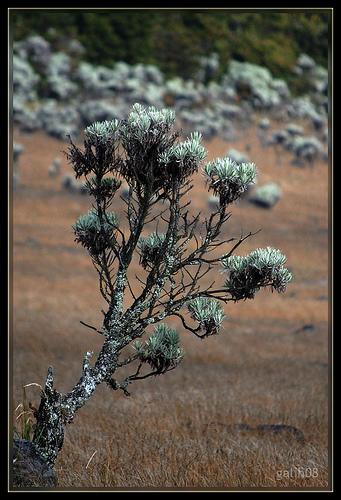 [Image: edelweiss12.jpg?w=341]